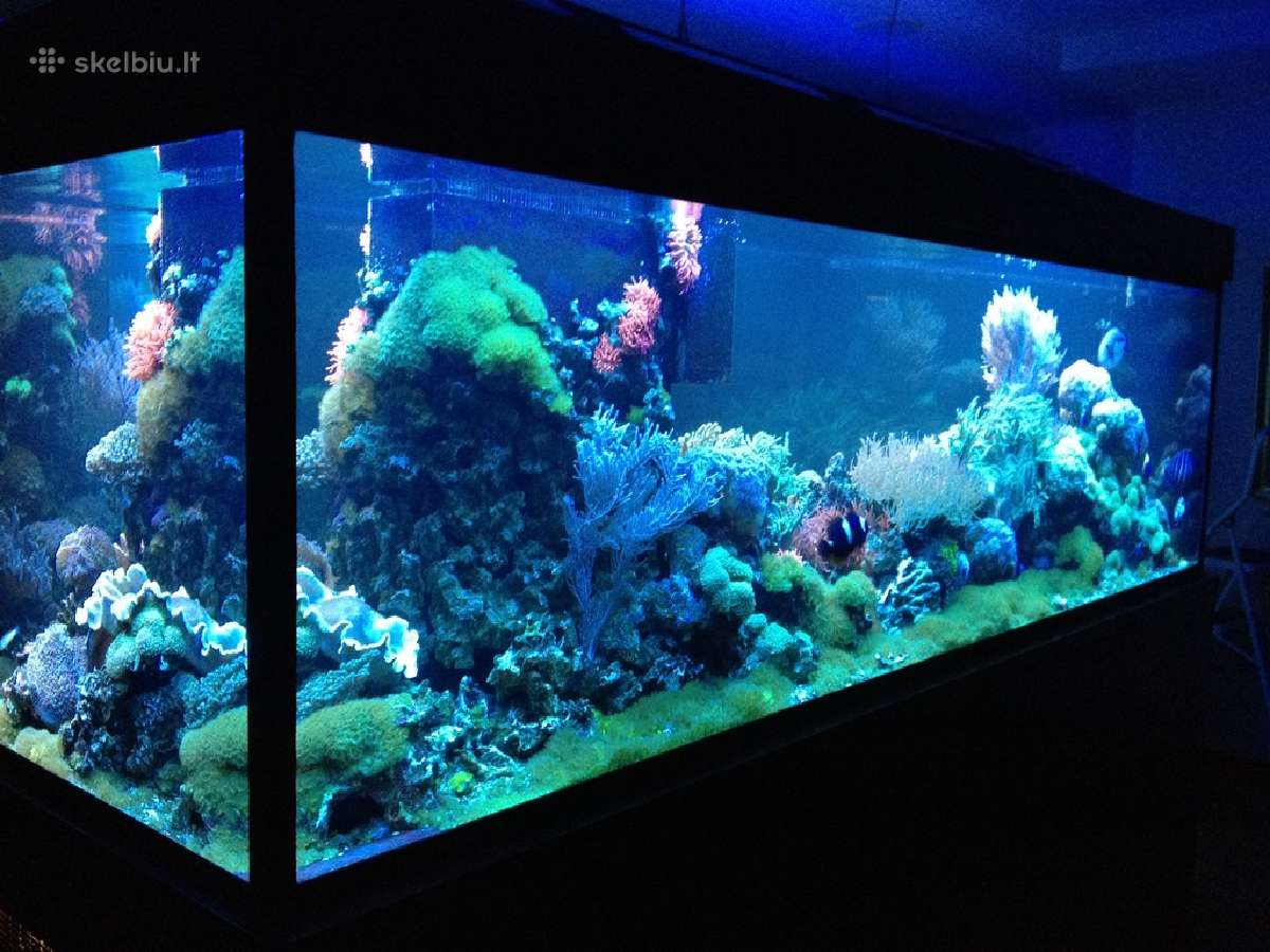 Gėlavandenių ir jūrinių akvariumų gamyba.