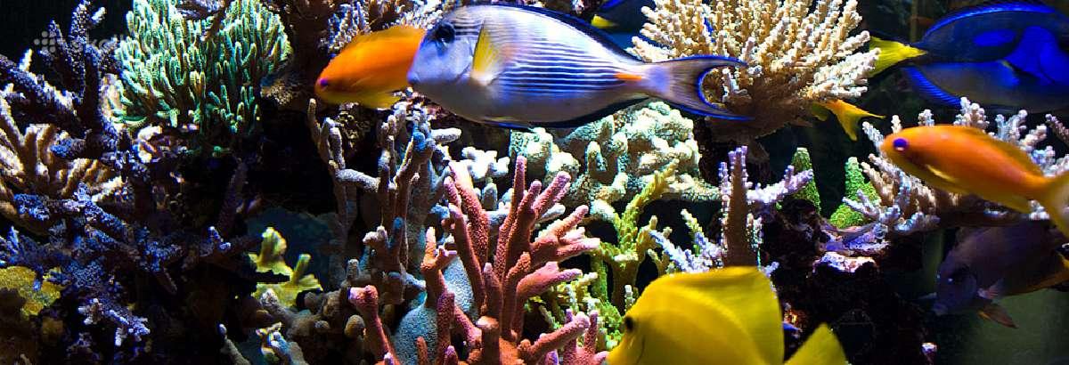 Jūrinis akvariumas - įranga ir aptarnavimas
