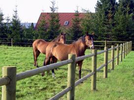 Tinklines tvoros arklių,galviju aptvarai