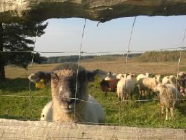 Avių ,galvijų ,danielų ganyklų aptvėrimai