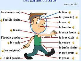 Prancūzų Kalba per Skype