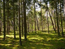 Perkame mišką visoje Lietuvoje