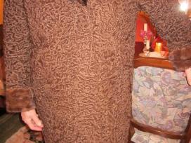 Rudo karalukio kailinius su audinės apykakle