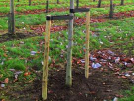 Mediniai kuolai Jūsų sodui ir tvoroms