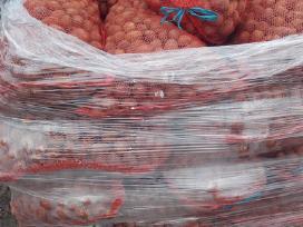 Pašarinės morkos bulvės