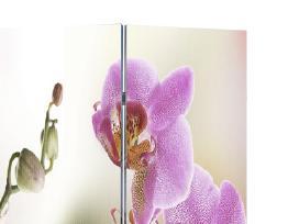 Kambario Pertvara su Gėlių Nuotraukomis, 240 x 180