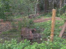 Vielos tinklas tvoros įrengimui mėsiniams galvijam