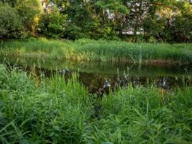 9-15 a. namų valdos sklypai prie upės ir miško