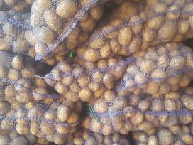 Bulvės Kopūstai