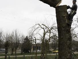 Medžiu genėjimas, pjovimas, kirtimas