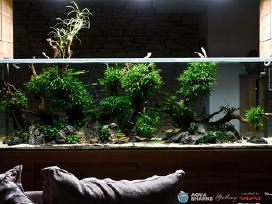 Išskirtinių akvariumų įrengimas ir priežiūra
