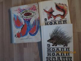 Rusu kalba -knygos vaikams