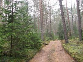 Perkame mišką, žemę visoje lietuvoje