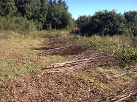 Krūmų, medžių kirtimas apleistose žemėse