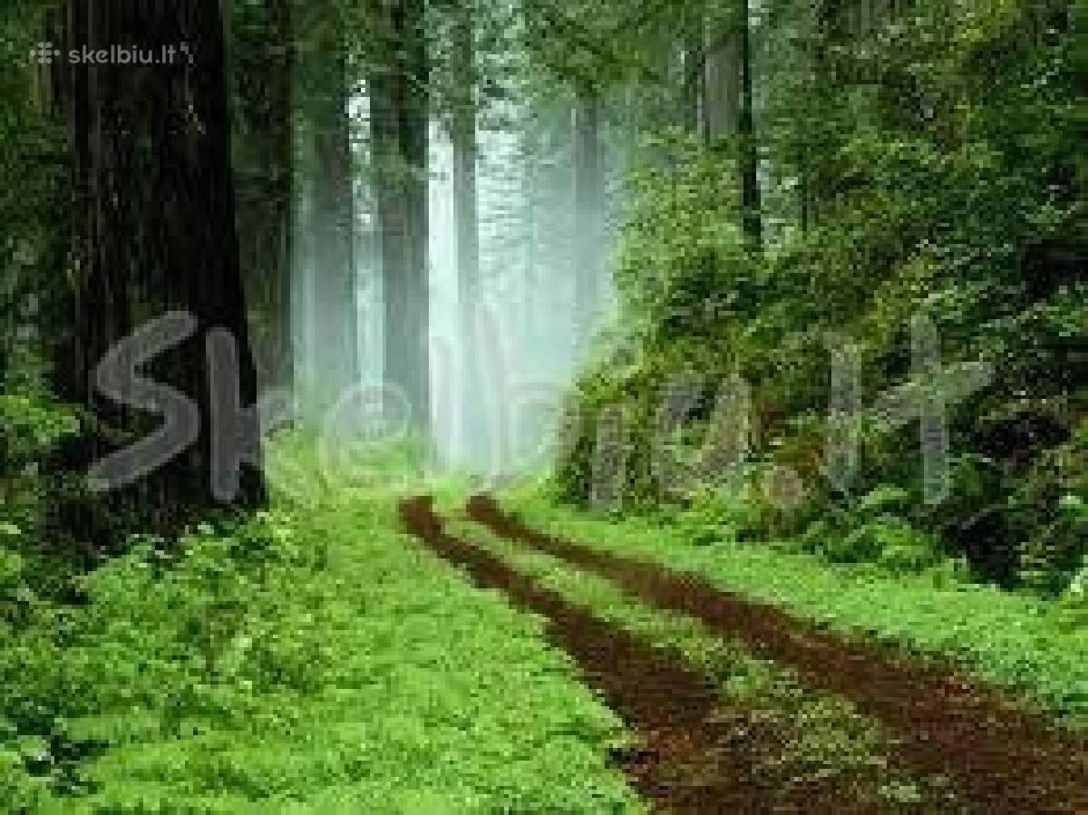 Brangiai perku mišką