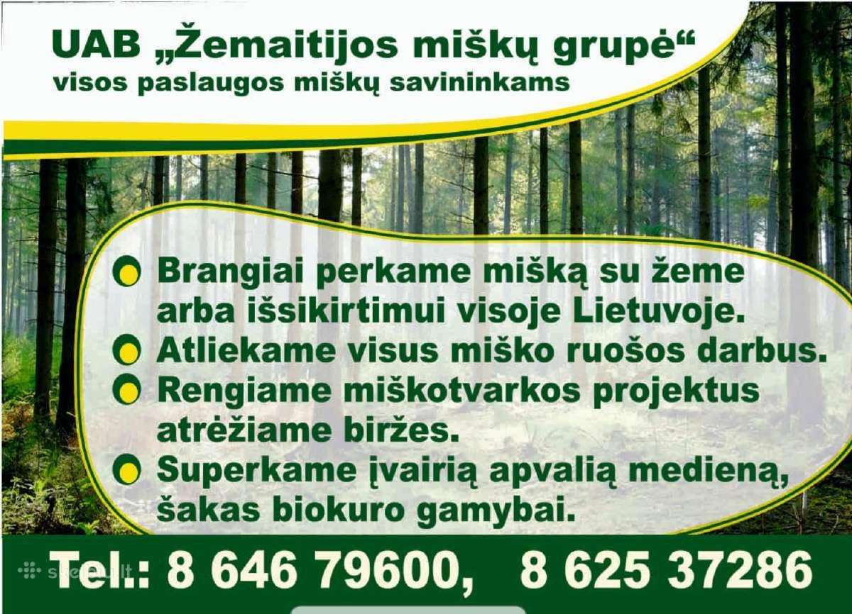 Įmonė Brangiai Perka Miškus