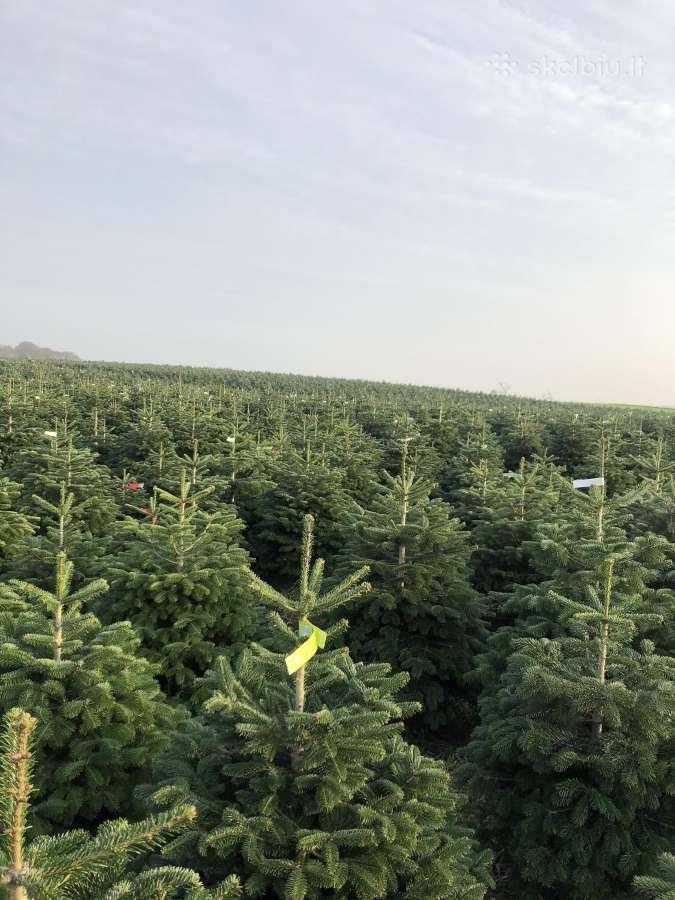 Kalėdinės eglutės Keniai