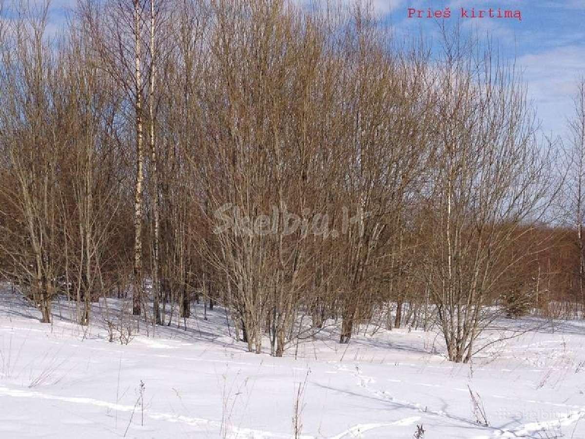 Krūmų, medžių kirtimas apleistose žemėse.primokame