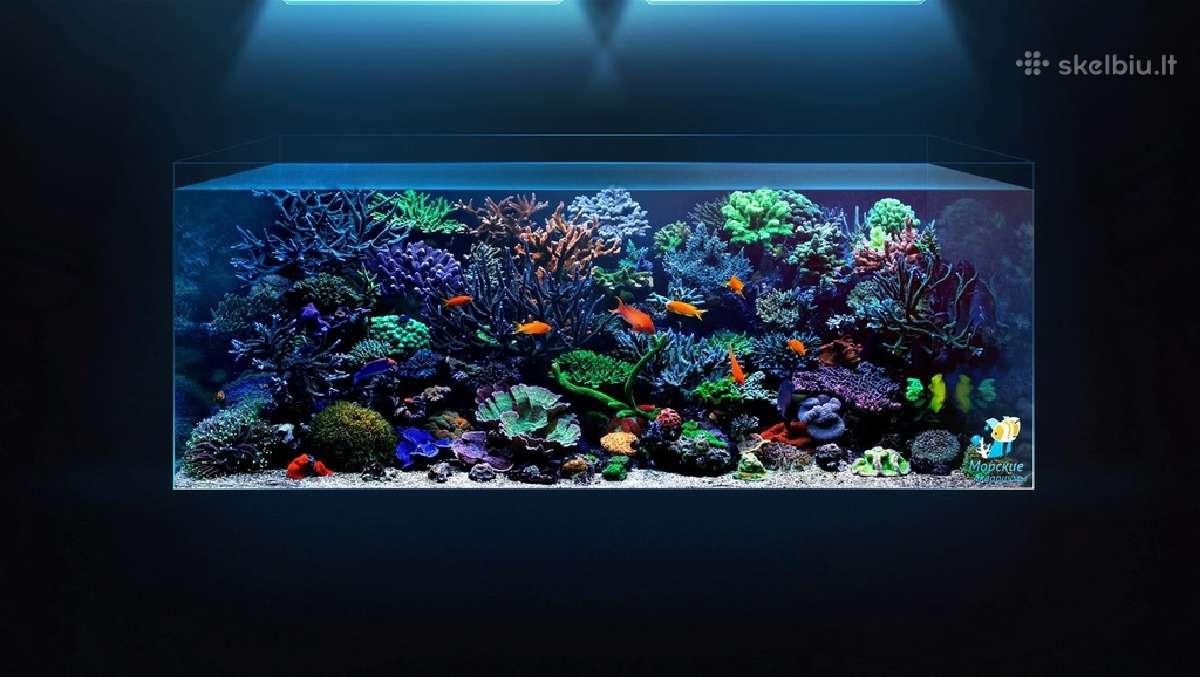 Mūsų sukurtas akvariumas kliento namuo