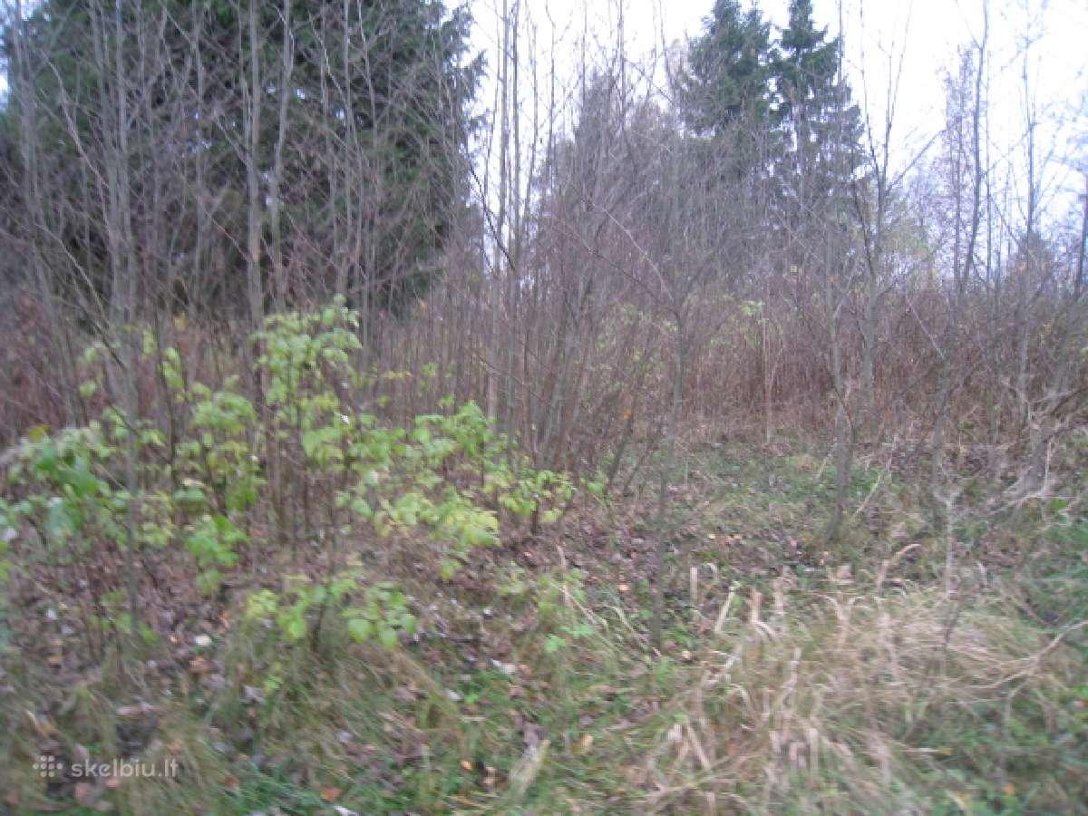Apleistų sodo sklypų tvarkymas