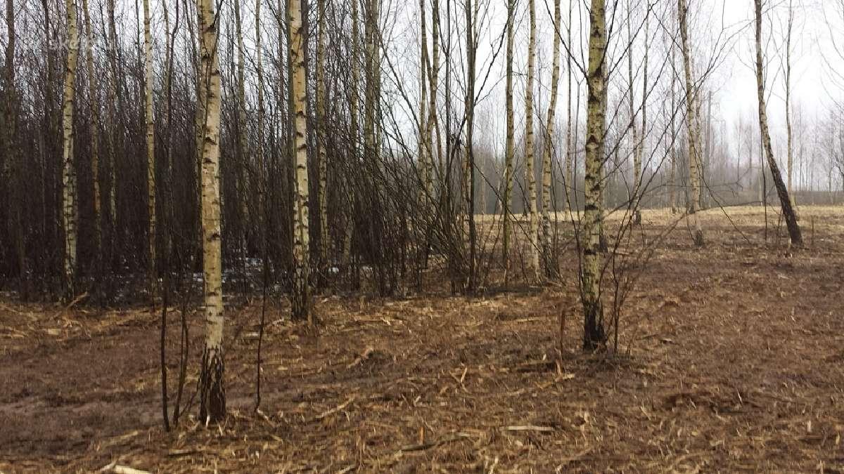 Medžių krūmų pjovimas Nemokamai