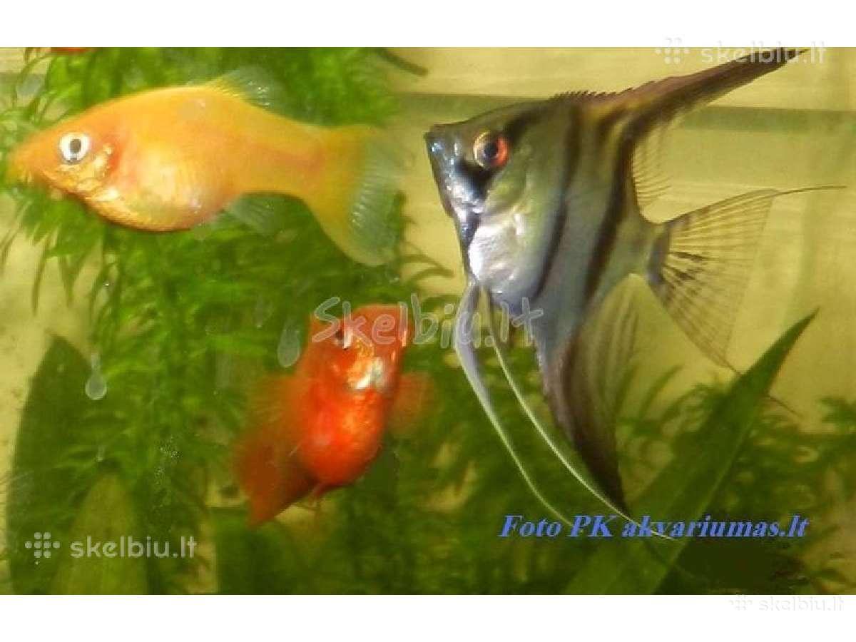 Įvairios žuvytės, vėžiai, sraigės.