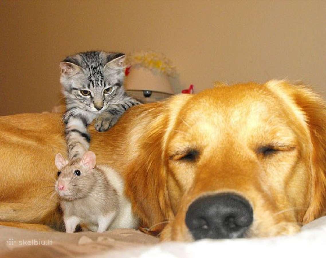 Prižiūriu šunis, kates bei kitus gyvūnus nuosavame