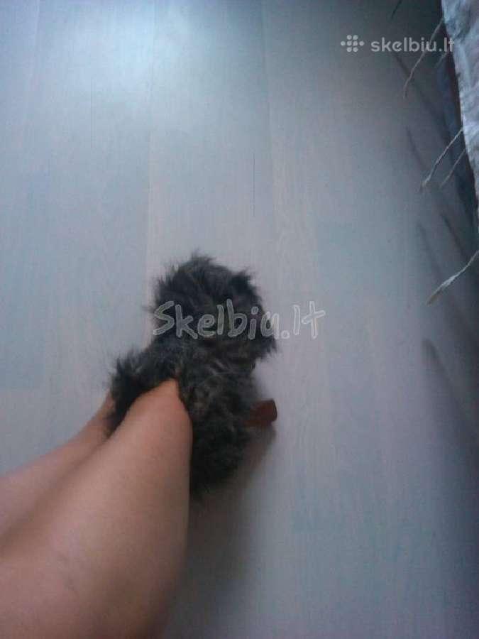 Stilingi kailiniai batukai is usa / jefrey campbel
