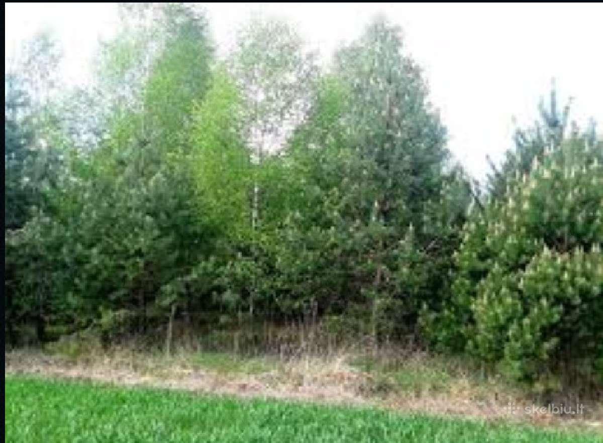 Biokuras. Krūmų ir miško kirtimas. Apleistų sklypų