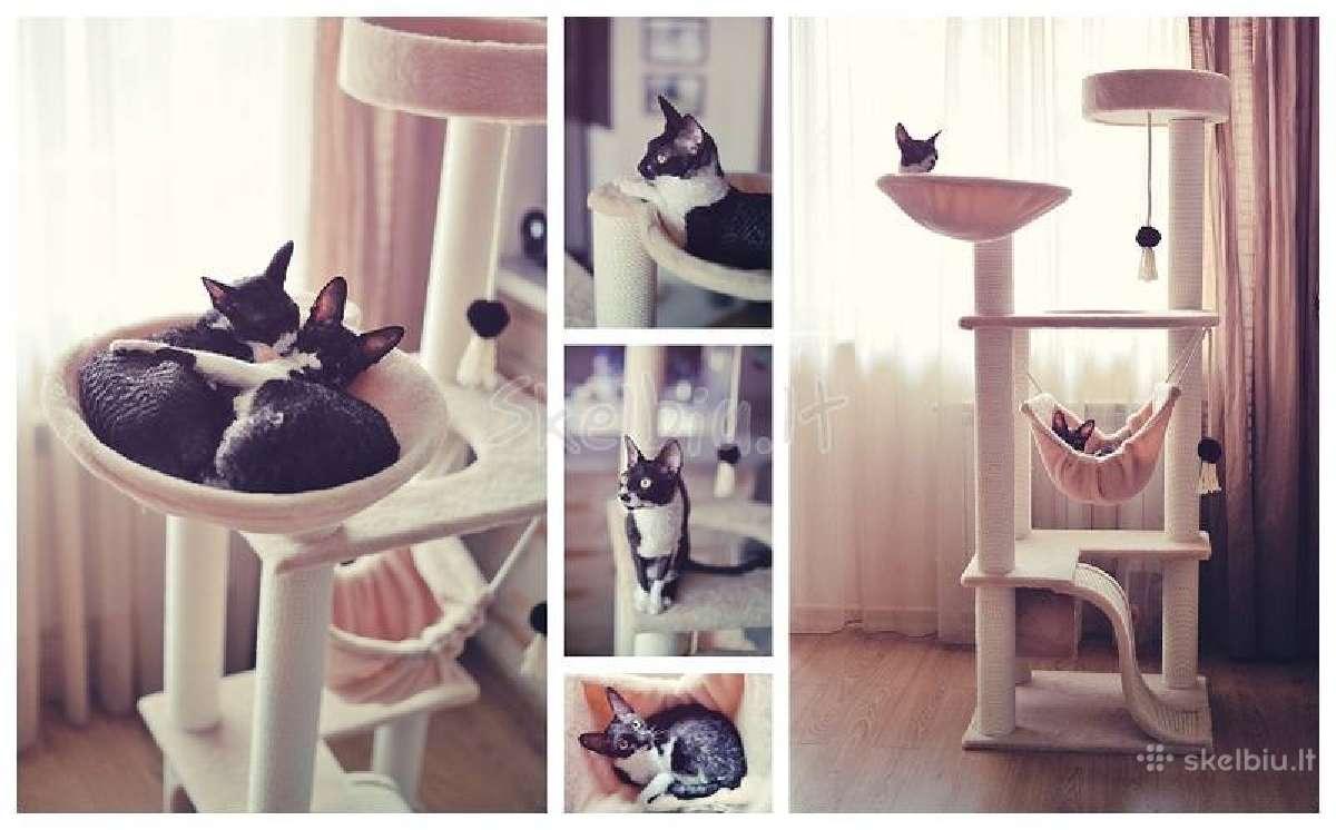 Draskyklės nameliai laipynės katėms