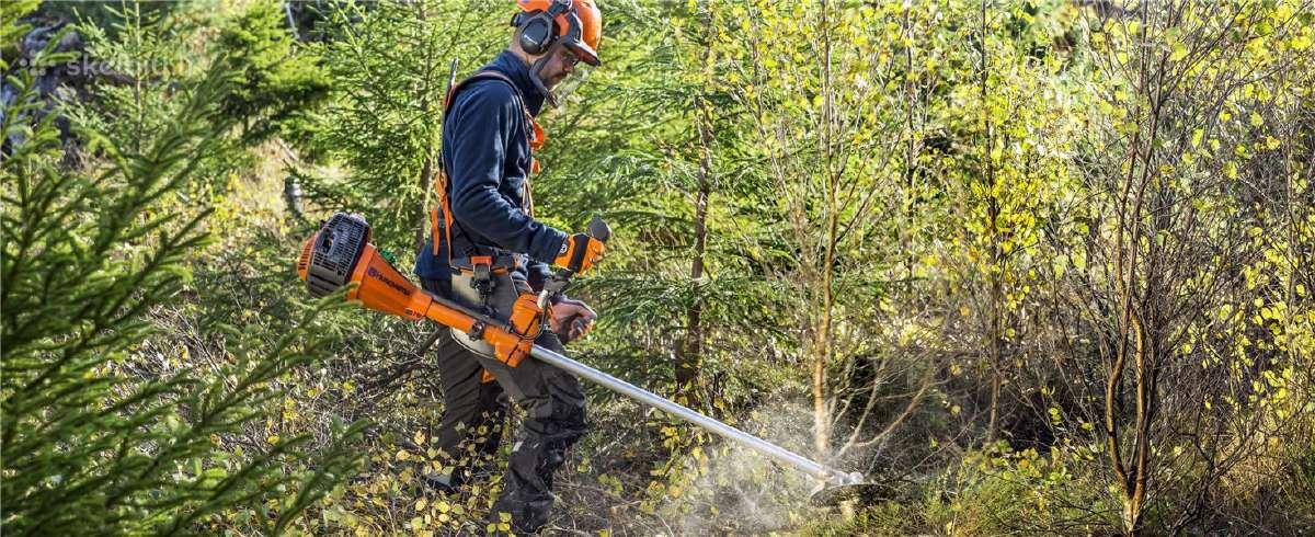 Miško ūkio darbai Skandinavijoje