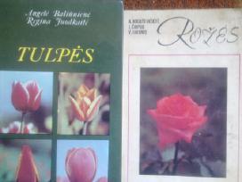 Tulpės ir rožės