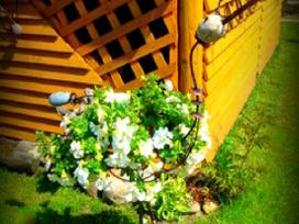 Akmeninės gėlės