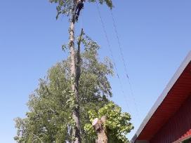 Avariniu medžių pjovimas