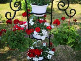 Parduodu gėlių stovą