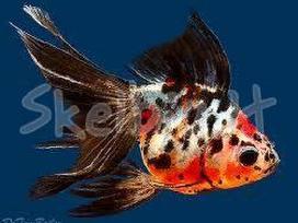 Gautos žuvytės,nuolaidos.
