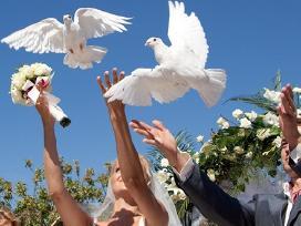 Balti balandžiai vėstuvėms, krikštynoms,.