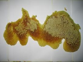 Medus stiklainiuose (2016-08)
