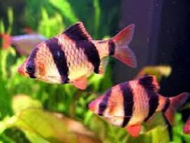 Žuvytės