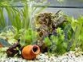 Pigiausi akvariumai klaipedoje