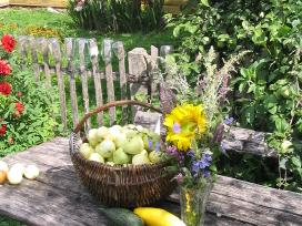 Savos daržovės ir bulvės iš Širvintų raj.