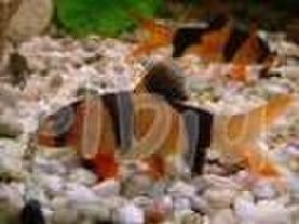 Nauja žuvų siunta , Pievų takas 19,klaipėda