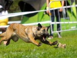Šunų dresūra-iškilusių problemų sprendimas. - nuotraukos Nr. 10