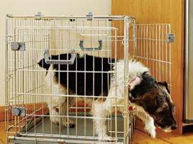 Metaliniai sulankstomi narvai šunims