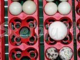 Itališki profesionalūs automatiniai inkubatoriai