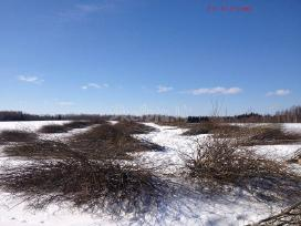 Krūmų, medžių kirtimas apleistose žemėse - nuotraukos Nr. 2