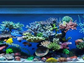 800l akvariumas kliento namuose