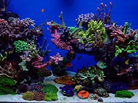 Jūrinis akvariumas 400l kliento bute