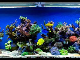 800l jūrinis akvariumas nuosavame name