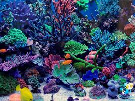 Rifinio akvariumo fragmentas.